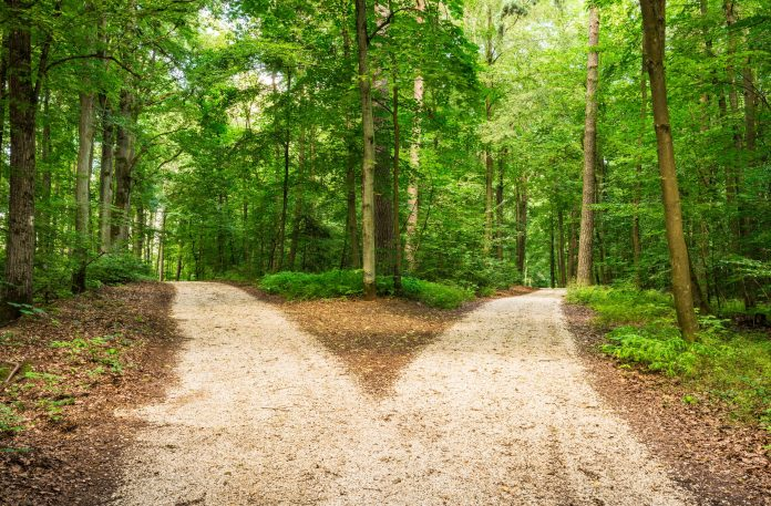Crossroad in green forest